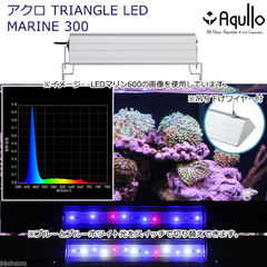 アクロ TRIANGLE LED MARINE 300 20000K Aqullo Series 関東当日便